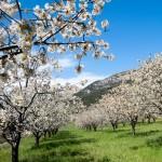 Valle del Jerte in Spring