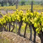 Vines la Rioja