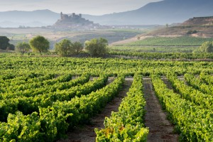 Photo of vineyards, La Rioja, Spain