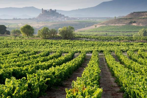 Photo of vineyards, La Rioja, Spain