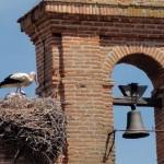 Tordesillas stork