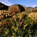 Flora in Serra da Estrela